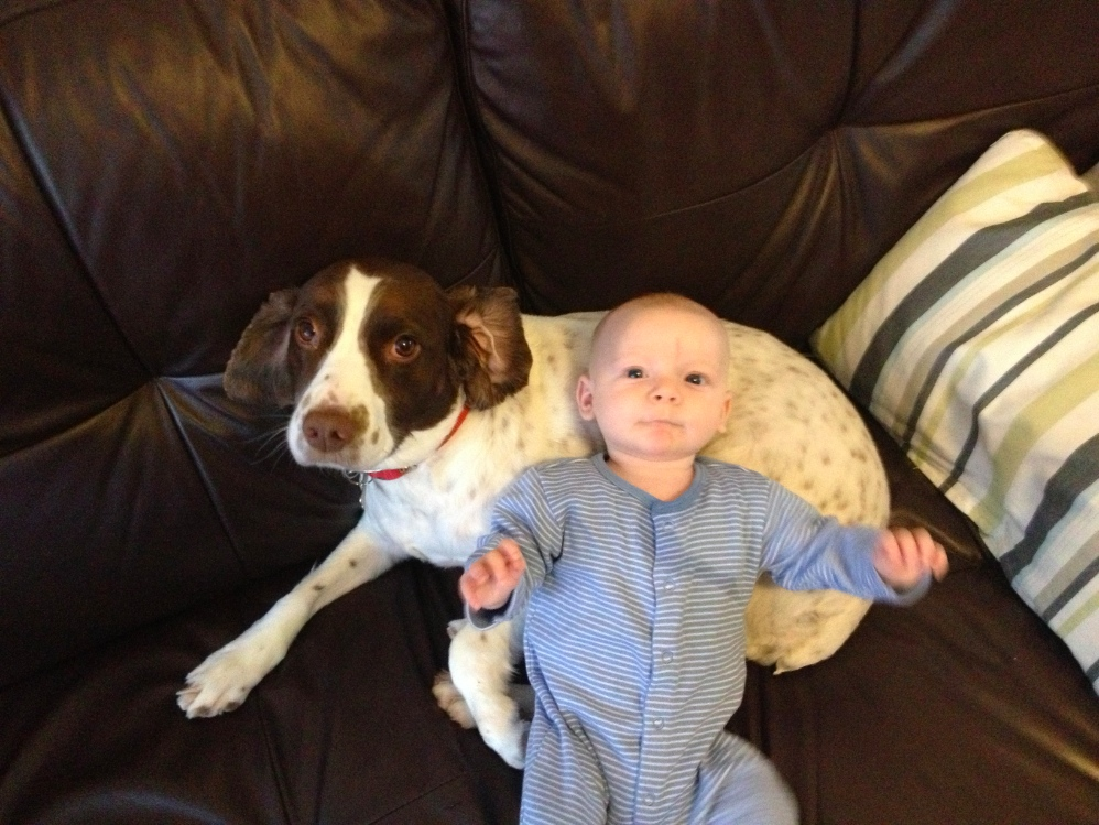 Baby and dog - introducing your pets to your new baby