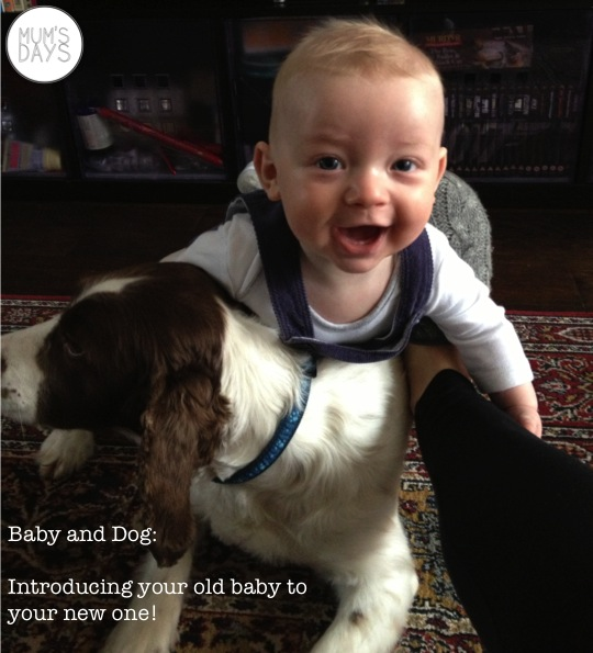 baby and dog - how to introduce your pet to your new arrival