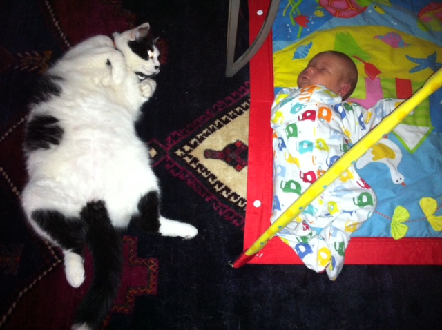 baby and dog, baby and cat - how to introduce your pets to your new arrival!