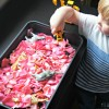 Rose Petal Sensory Play - Fun Valentines Day activity idea for toddlers and children! Click here for some wonderful photos and how to do this sweet idea: http://www.mumsdays.com/rose-petal-sensory-play/