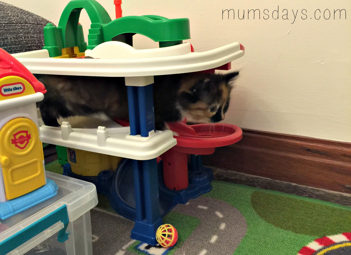 Meet the kittens - what you need and introducing a toddler to kittens! http://www.mumsdays.com/meet-the-kittens/